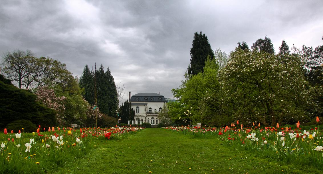 Arboretum en plantentuin Kalmthout - In elk seizoen een bezoek meer dan waard. Het standpunt voor deze plat bezorgde me een paar natte en vuile knieen... :) - foto door kosmopol op 02-05-2012 - deze foto bevat: tulpen, arboretum, bloemen, kosmopol