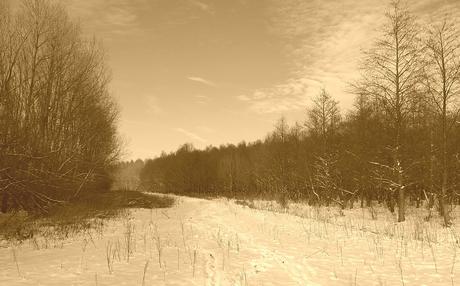 wondere winter wereld