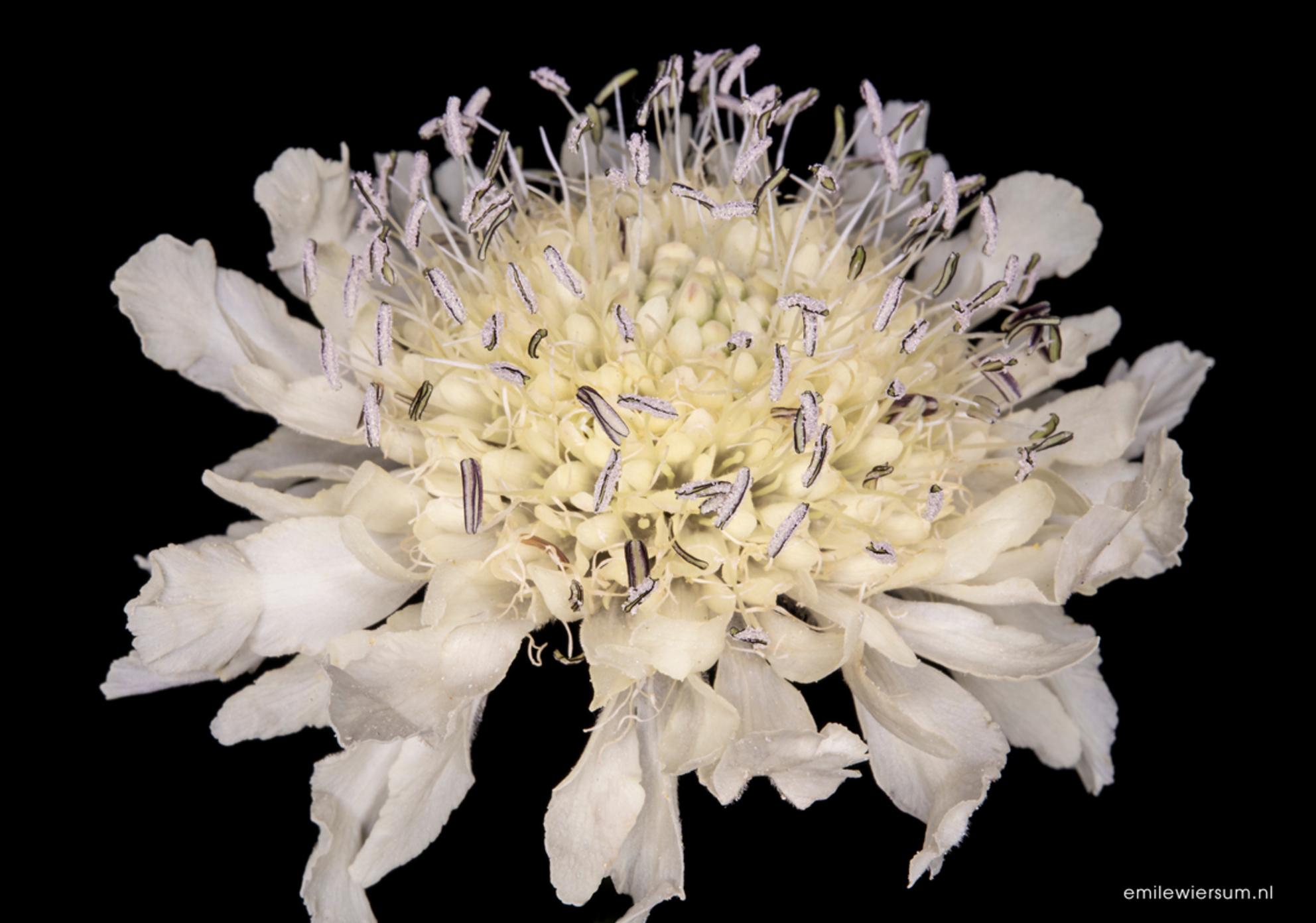 White flower - - - foto door emilewiersum op 26-06-2018 - deze foto bevat: groen, wit, zon, bloem, natuur, druppel, licht, zwart, zomer