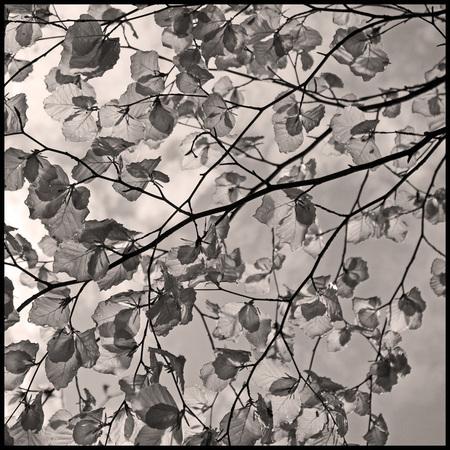 The leaves - Hello, Hello, Hello, Hello Good-bye, Good-bye, Good-bye, Good-bye That's all there is And the leaves that are green turned to brown  (Simon and  - foto door hillegonda op 01-05-2012 - deze foto bevat: bladeren, licht, blad, voorjaar