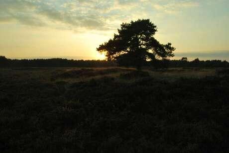 Heide in Hooghalen