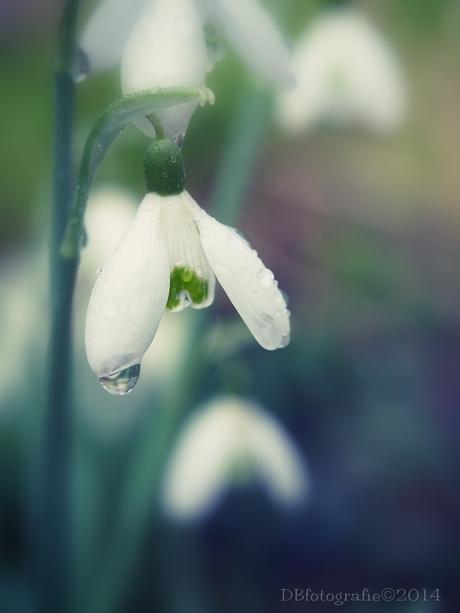 voorjaar?