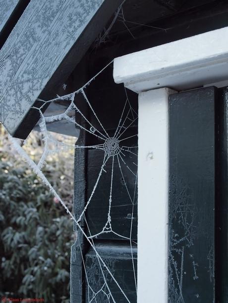 Frosty Spinnenweb