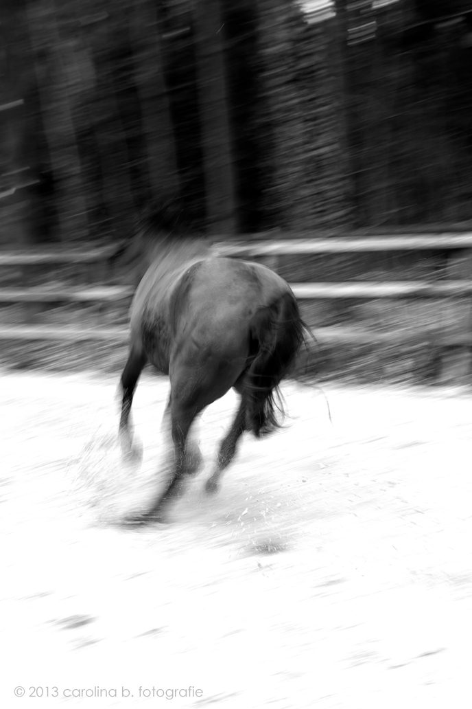 Project I, Beweging - Remmuuuuhhhhh! - foto door brinkbeest op 26-02-2013 - deze foto bevat: paarden, actie, zwartwit, beweging, project I