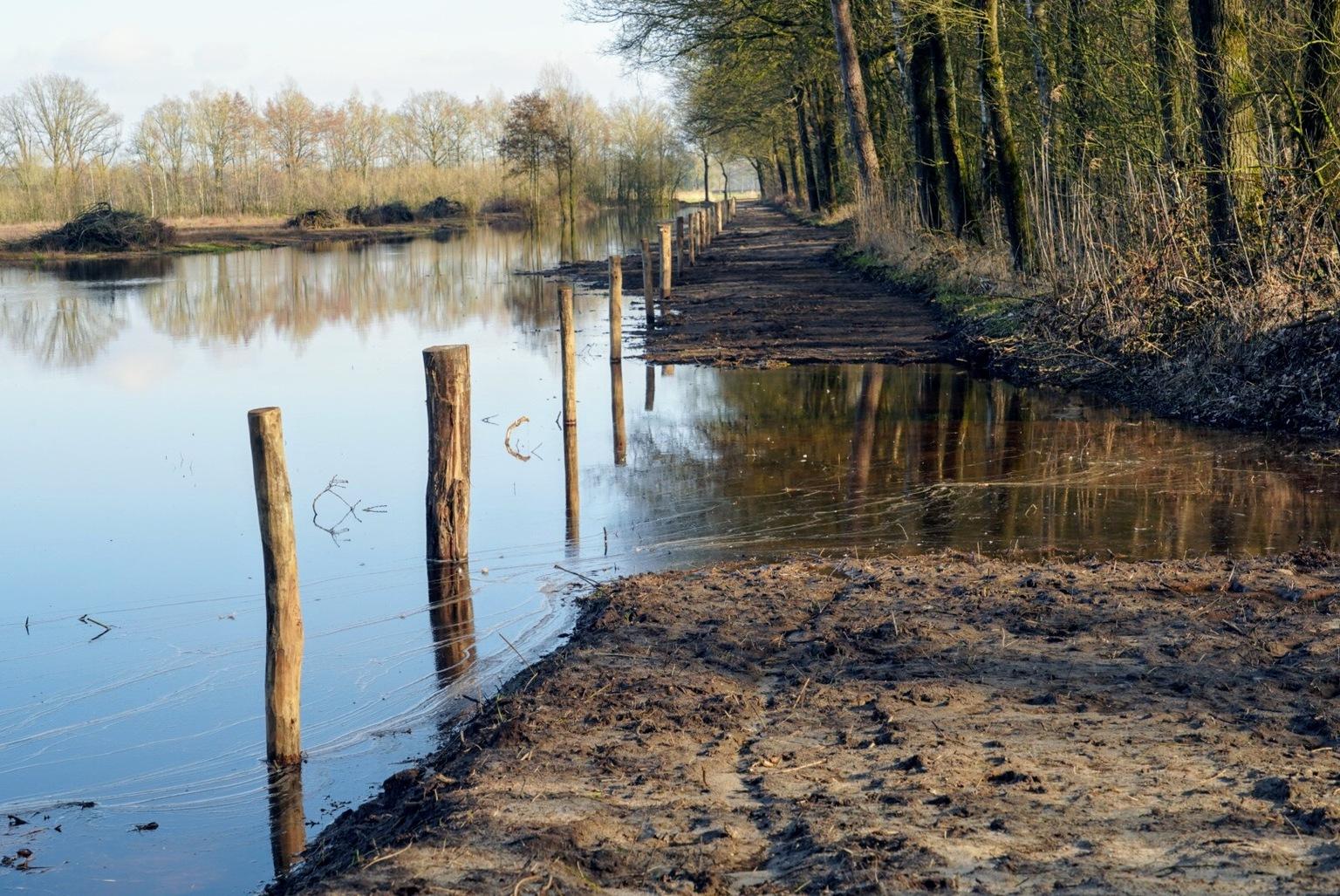 Kampina - Vroeg voor jaar in de Kampina - foto door Frenk2021 op 11-04-2021 - locatie: Oirschot, Nederland - deze foto bevat: water, fabriek, watervoorraden, lucht, boom, natuurlijk landschap, natuurlijke omgeving, fluviatiele landvormen van beken, hout, meer