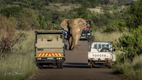 Boze olifant op de weg