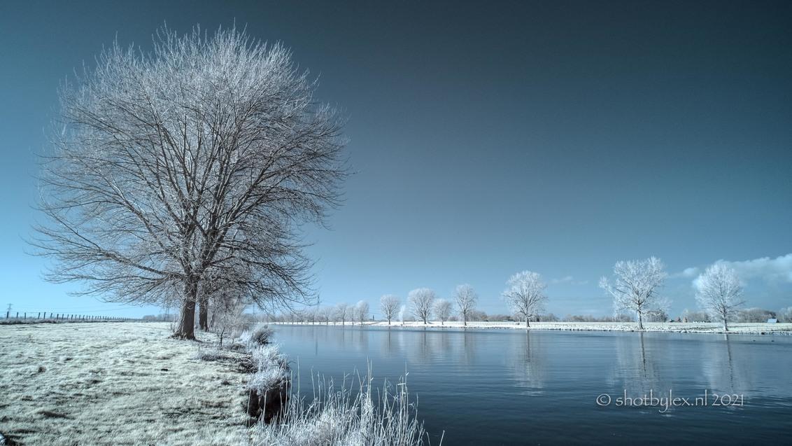 Down by the river - Foto in infrarood, in de nabewerking van infrarood terug gezet naar kleur, het zogeheten false color infrarood. Het geeft een vervreemdende sfeer in  - foto door meneerlex op 13-01-2021 - deze foto bevat: lucht, water, licht, winter, spiegeling, landschap, bomen, rivier, infrarood, false color