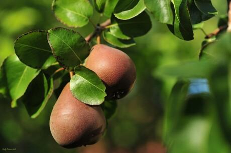 Fruit voor de herfst
