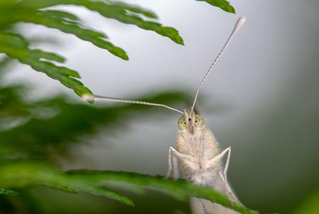 Ons koolwitje - Met dank aan de vlinderstichting een prachtig project Koolwitjes in de klas. Van eitjes tot rups, van pop tot vlinder. Nadat er in de klas diverse vl - foto door RBvandaag op 18-06-2018 - deze foto bevat: macro, vlinder