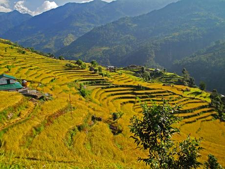 Rijstterassen Annapurna massief (Nepal)