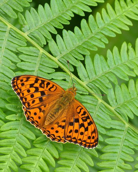 vlinder op blad