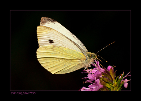 Weer eens een vlinder..