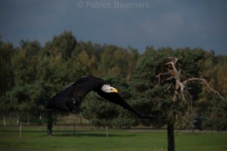 Roofvogelshow 5.jpg
