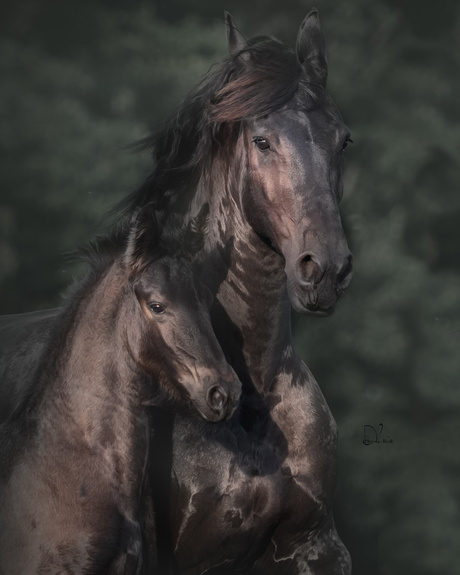 Femke and her foal