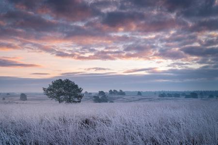 Frosty Morning - - - foto door renevierhuis op 10-01-2021 - deze foto bevat: lucht, wolken, natuur, rijp, landschap, heide, zonsopkomst, bomen, vorst