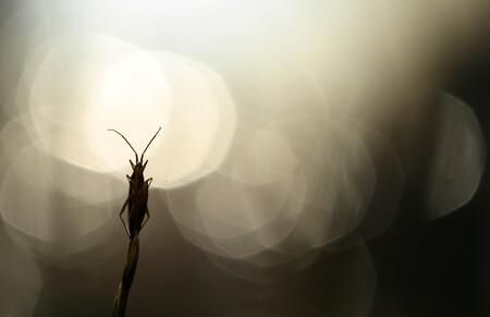 OCHTEND - ochtend...duizend schitteringen in het water... licht..stilte...een zomerochtend - foto door dylano op 26-07-2015 - deze foto bevat: macro, licht, insect, bokeh, dylano