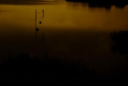 Reiger in maanlicht. - Tijdens de basis fotocursus die ik - gewapend met mijn gloednieuwe brugcameraatje - deed, kreeg ik de opdracht een foto bij/in maanlicht te maken. Ni - foto door biancavermeer op 26-03-2011 - deze foto bevat: water, natuur, avond, reiger, nacht, maanlicht