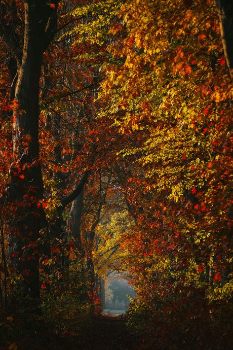 My Autumn Morning.