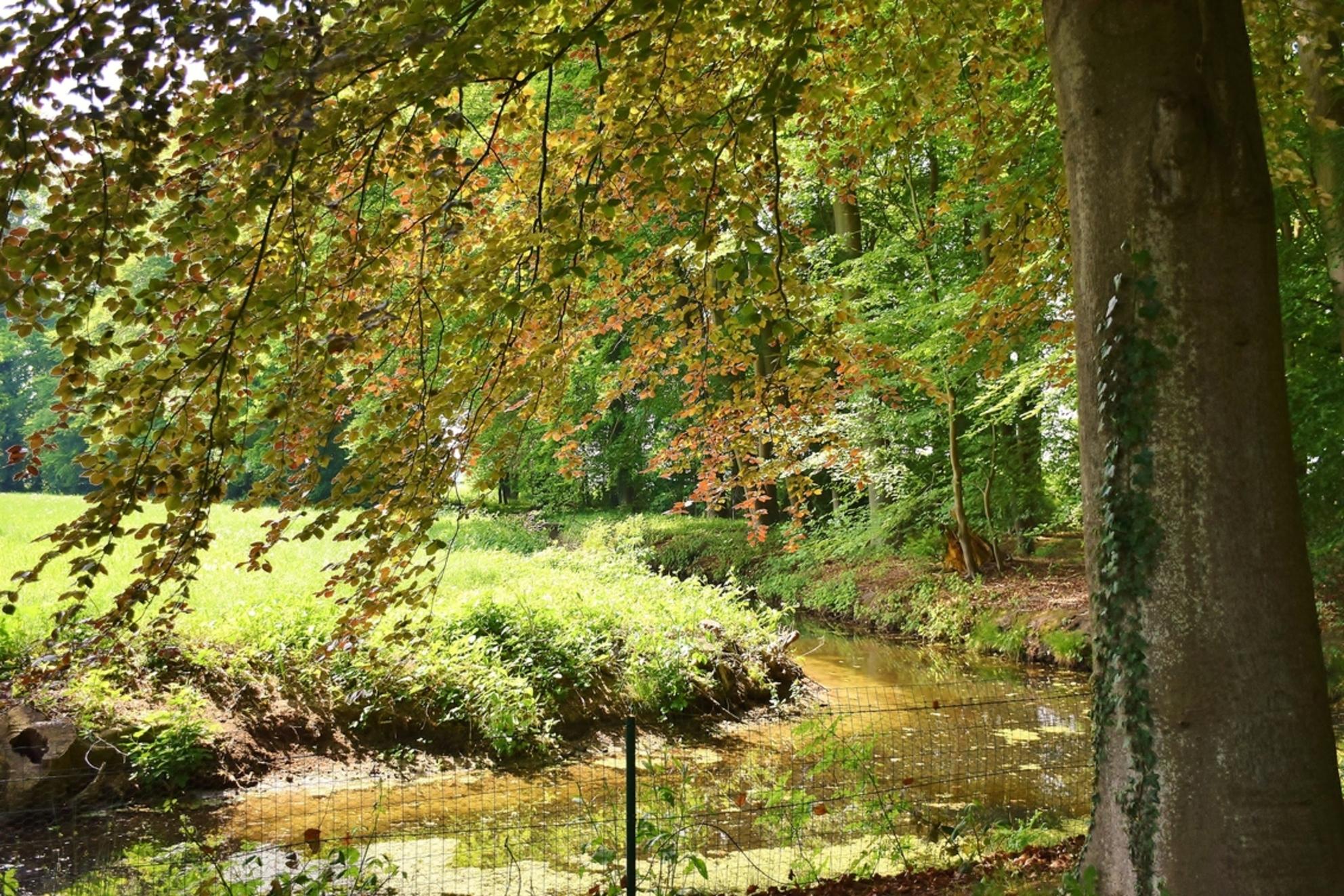 Stromend beekje - Stromend beekje - foto door 1Herdershond op 26-05-2019 - deze foto bevat: groen, water, park, landgoed, bos, bomen, beek, struiken, beekjes - Deze foto mag gebruikt worden in een Zoom.nl publicatie