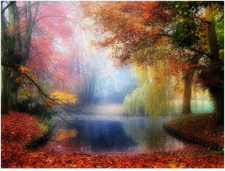 vijver herfstbos