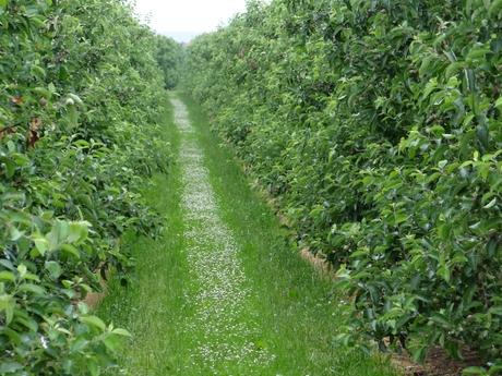 Boomgaard in Wijk bij Duurstede