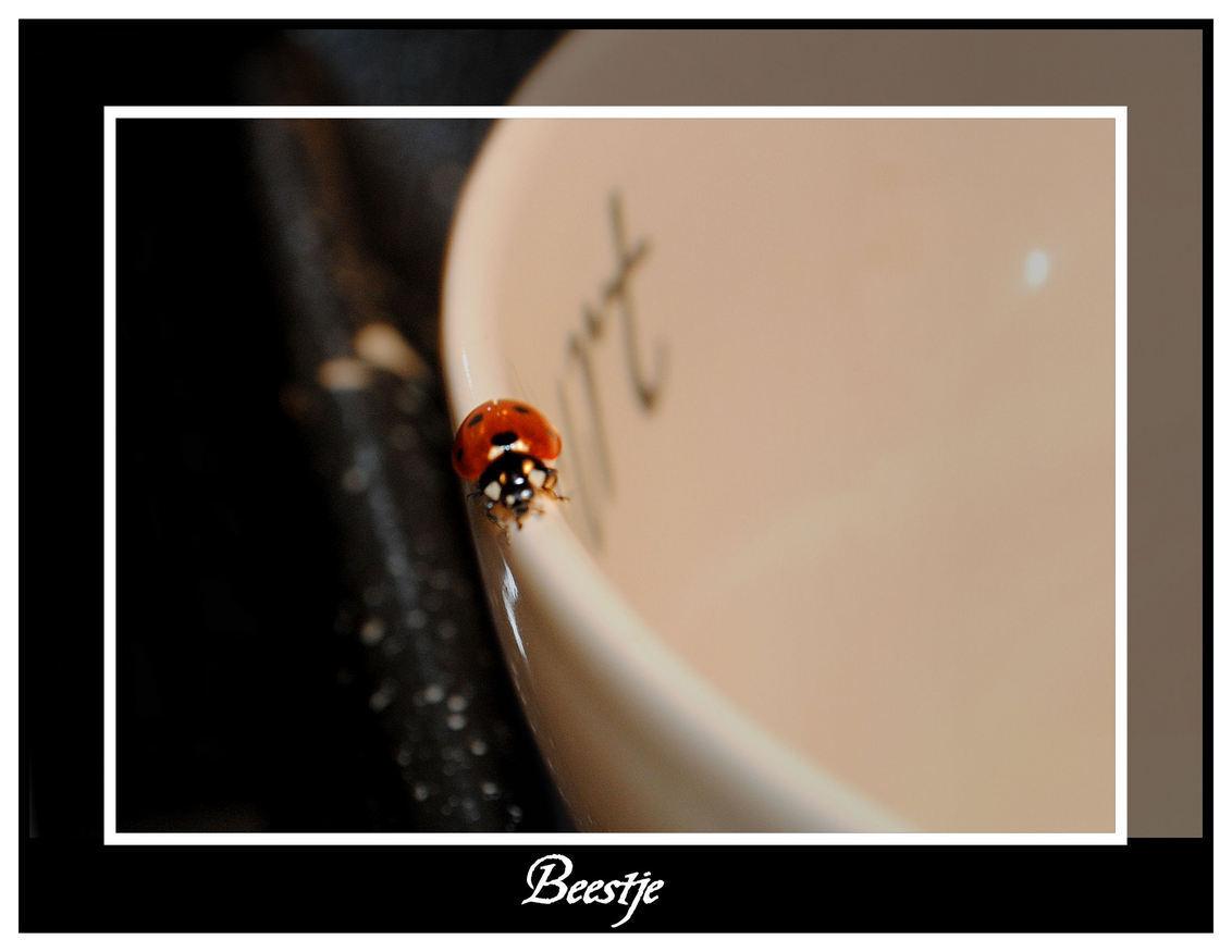 Bezoek van een Lieveheersbeestje - Die zat van de week zomaar in mijn keuken, liep steeds maar rondjes over de rand van het schaaltje,tot ie er van vermoeidheid in viel..... helaas he - foto door spitsoor op 17-12-2009