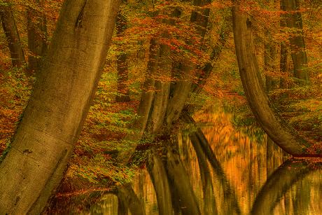 Herfst in Twente: Twickelervaart