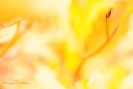Golden bud