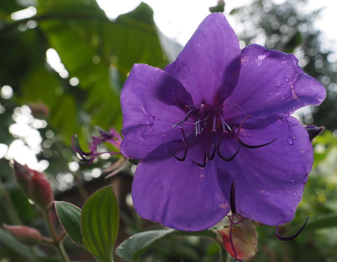 ZEG HET MET , - Bloemen.... - foto door pietsnoeier op 26-10-2014 - deze foto bevat: groen, paars, kleur, macro, bloem, natuur, tuin, dof, bokeh