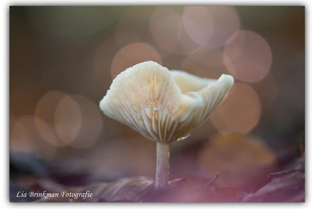 Lichtjes !! - een feest van lichtjes ontstond er tijdens het maken van deze foto. gemaakt tegen licht en herfstkleuren in het bos.  geen filter gebruikt. - foto door hulsman op 23-11-2015 - deze foto bevat: macro, natuur, roos, licht, paddestoel, herfst, tegenlicht, dof, bokeh