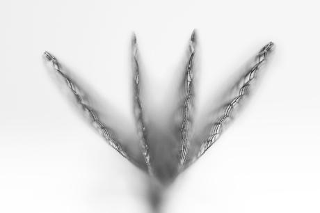 abstract damselfly