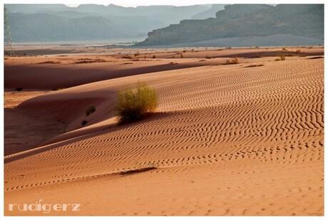 zandduinen Wadi Rum