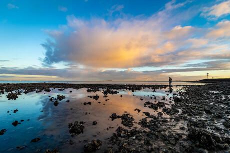 Bergen oesters