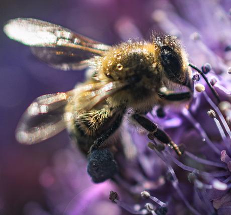 Blauwe honing