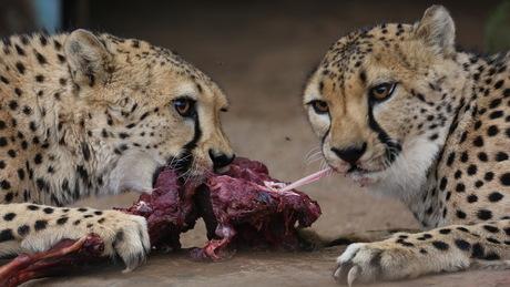Smakelijk eten