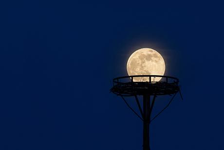 De maan op zijn nest