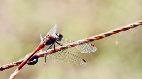 Dragonfly number two