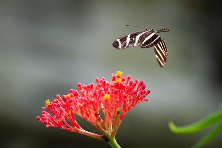 Prepare to land - Nog een foto van mijn persoonlijke uitdaging vlinders in volle vlucht, gisteren in Wildlands - foto door RBvandaag op 05-05-2018 - deze foto bevat: dierentuin, vlinder, dieren