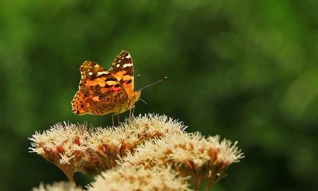 Ode aan vlinders