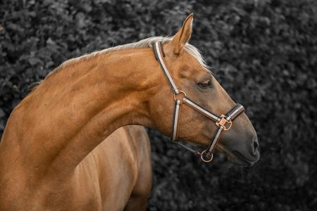 Medena; een portretfoto - - - foto door Leliesan op 26-02-2020 - deze foto bevat: paard, portret