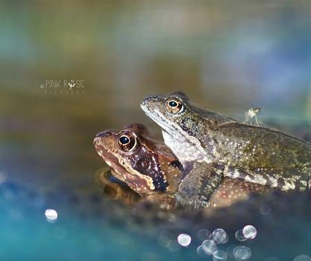 1 april... - Dank voor het opnemen in de collectie 'Toffe kikkers'. Blij mee, yeah!!!  1 april...  A. Ieder doet wat 'ie wil B. Kikker in je bil C. Zit eens - foto door PinkRosePictures op 01-04-2021 - deze foto bevat: groen, blauw, kikker, lente, dof, heidekikker