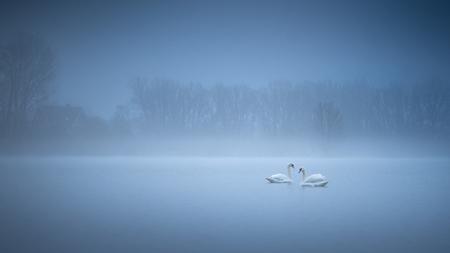 Zwanenmeer - Er werd mist voorspeld, maar dat het zo dicht zat dat viel tegen. Maar toen ik bij dit meer kwam en deze zwanen zag zwemmen werd ik ondanks de vries - foto door marielledevalk op 27-02-2021 - deze foto bevat: lucht, boom, water, natuur, winter, vogel, landschap, mist, zwaan, zwanen, meer