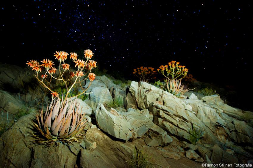 Night Sky - De sterren in Namibie, Afrika met n mooie rotstuin in de voorgrond. - foto door eyefocus-76 op 12-06-2012 - deze foto bevat: bloemen, nacht, rotsen, sterren