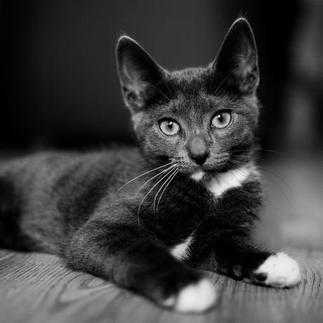 Mr Kitty