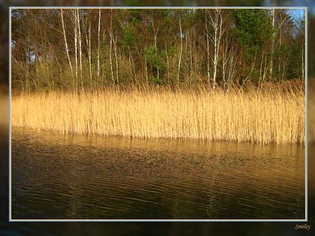 riet langs het water