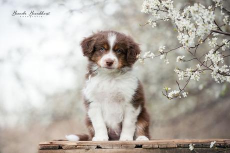 Pupje bij de bloesem