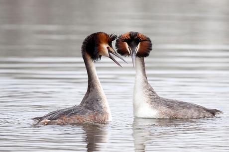 Futen in love....