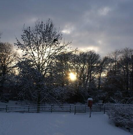 Winterzon tussen de bomen