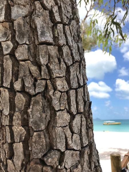 Schors - - - foto door VosL op 21-05-2019 - deze foto bevat: tree, bast