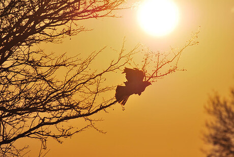 The Flying Bird